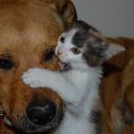 Gatto assalito, ma da cuccioli di cane!