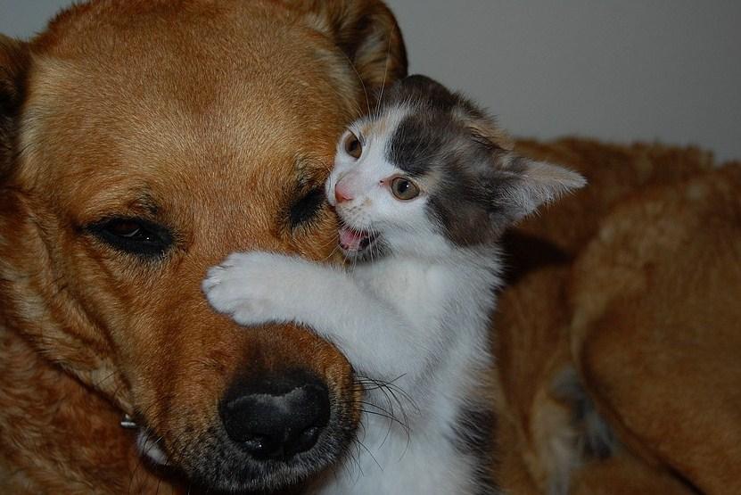 Gatto assalito ma da cuccioli di cane for Youtube cani e gatti