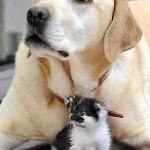Il cane più paziente del mondo