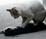 L'amore di una gatta per il suo compagno