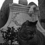 I gatti di Roma