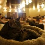 I gatti di Tokyo