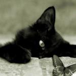 L'eleganza del gatto nero