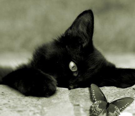 Risultati immagini per immagini gatto nero gratis