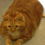 Skinny, il gatto che ha commosso l'america