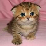 Il gatto più bello del mondo!