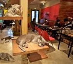 Cat Cafè. I bar per i gatti!