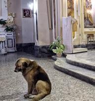 Il pastore tedesco che aspetta in Chiesa la padrona