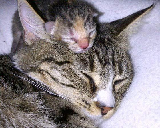 I gattini più teneri del mondo
