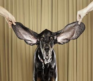 Harbor come Dumbo: che orecchie!