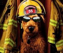 Leo, il cane eroe che salva dei gattini da un incendio.