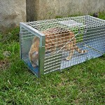 Gatti vittime dei bracconieri