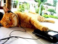 Gatti e musica: i gusti musicali dei felini