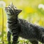 Le piante dannose per il vostro gatto – I CONSIGLI DI DOTTOR MIAO