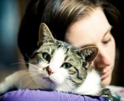 Come comunicare con il tuo gatto? – I CONSIGLI DI DOTTOR MIAO