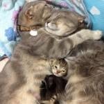 Piccoli gattini di campagna crescono