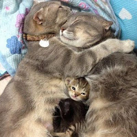 Molto Piccoli gattini di campagna crescono HR92