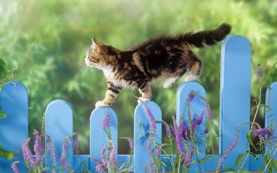 L'incredibile storia del gatto randagio equilibrista.