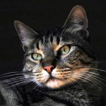 15 cose da sapere sui gatti. E tu lo sapevi che...
