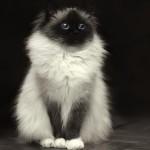 Come capire se il vostro gatto sta male? – I CONSIGLI DI DOTTOR MIAO
