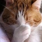 Il vostro gatto vi graffia? Ecco i rimedi