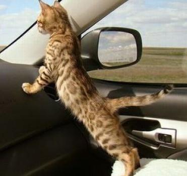 In viaggio col mio gatto. Cosa fare – I CONSIGLI DI DOTTOR MIAO