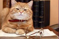 Complimenti. Il tuo gatto è molto intelligente!