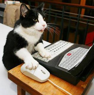 Scopri quanto è intelligente il tuo gatto [TEST]