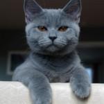 Le 10 cose da NON fare per conquistare un gatto – GATTI DIVERTENTI