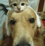 Amici Miao