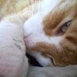 Relax felino!