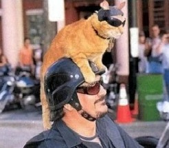 Scopri che gatto sei! [TEST]