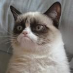 Grumpy Cat, la gatta più burbera del web - GATTI DIVERTENTI