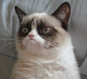 Grumpy Cat, la gatta più burbera del web – GATTI DIVERTENTI