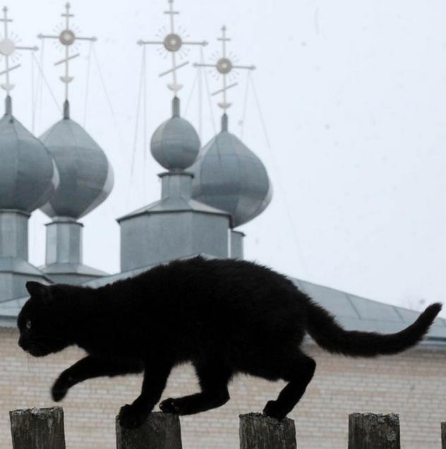La storia di Benito, il gatto del campanile