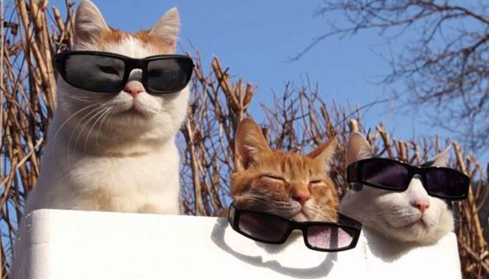 Caldo eccessivo 8 consigli per proteggere cani e gatti for Youtube cani e gatti