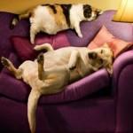 Intervista doppia: cane & gatto!