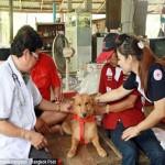 Neonata salvata da cane eroe