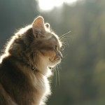 Cantico del Gatto