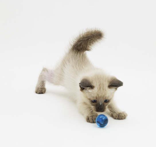 I giochi per il vostro gatto – I CONSIGLI DI DOTTOR MIAO