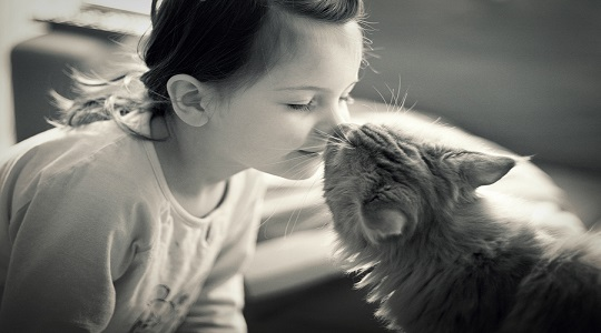 gatti adorano padroni