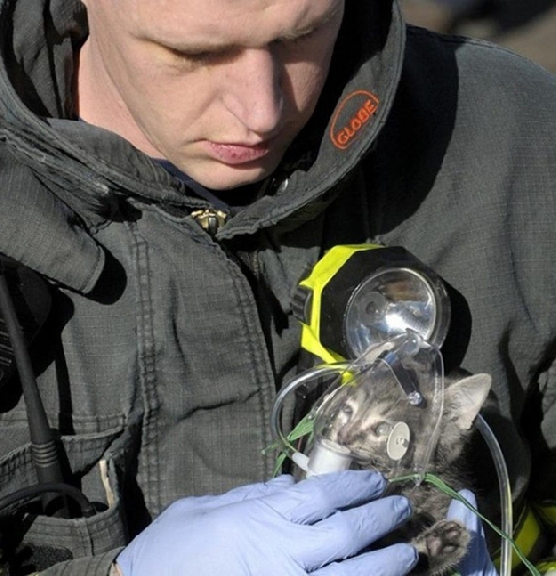 Gattino salvato dai pompieri. Il caposquadra lo adotta.