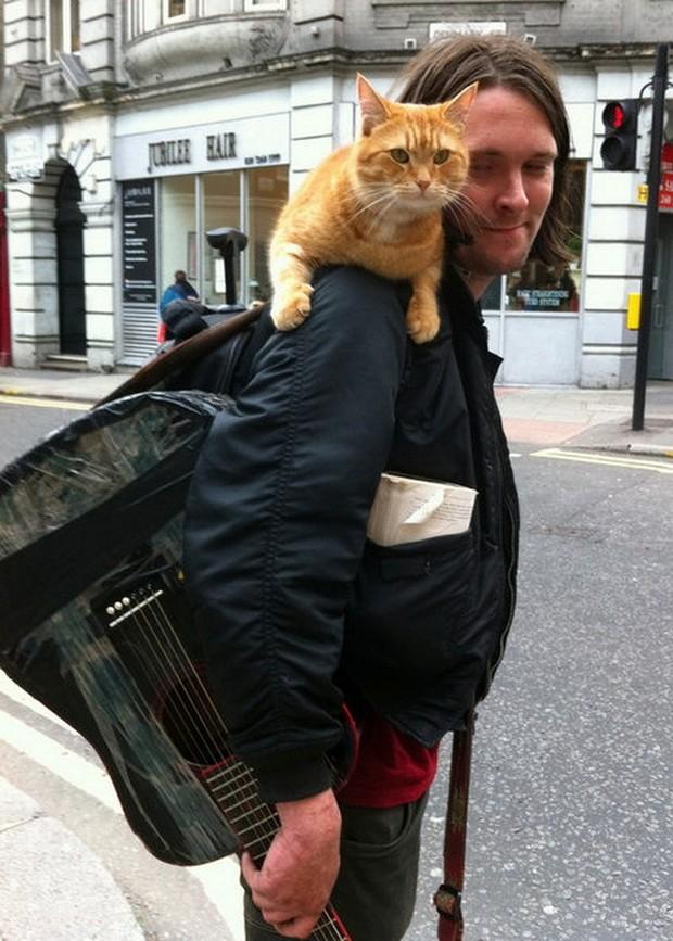 La storia del gatto Bob. Dopo il libro, ecco il film!