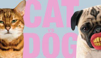 Cane vs Gatto! LA SFIDA