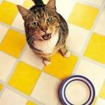 La dieta estiva di cane e gatto – I CONSIGLI DI DOTTOR MIAO