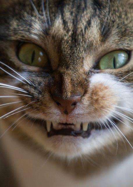 """""""Il gatto furioso"""" di Ludovico Arrosto – Canto Terzo"""