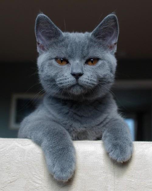 Préférence Le 10 cose da NON fare per conquistare un gatto - GATTI DIVERTENTI ST89