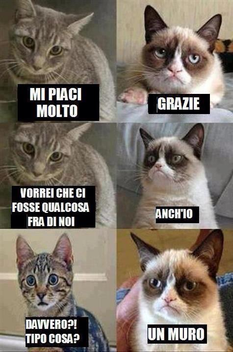 grumpy cat amore italiano
