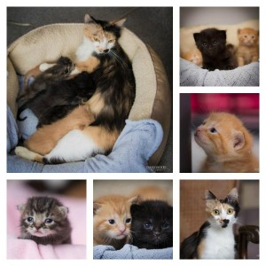Queste straordinarie immagini mostrano l'amore di mamma gatta.