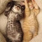 Gattini – Le foto più pucciose del web